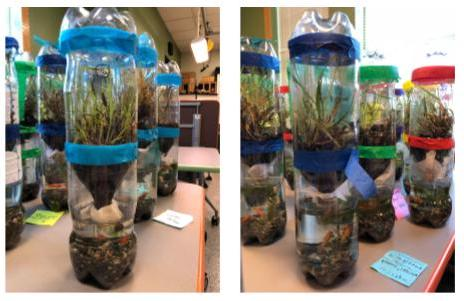 closed ecosystem in a bottle science project